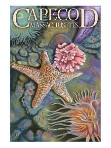 Cape Cod, Massachusetts - Tidepool by Lantern Press
