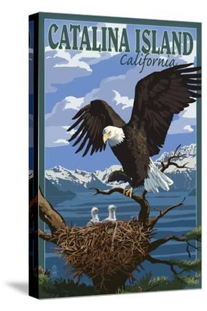 Catalina Island, California - Bald Eagle and Chicks