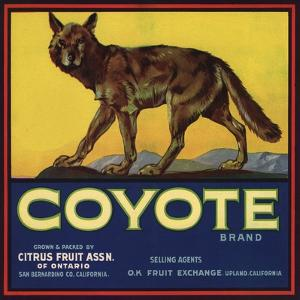 Coyote Brand - Upland, California - Citrus Crate Label by Lantern Press