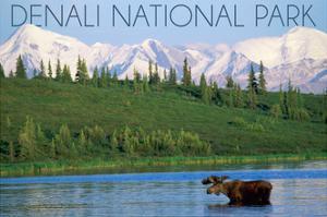 Denali National Park, Alaska - Moose and Water by Lantern Press