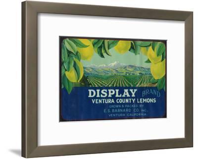 Display Lemon Label - Ventura, CA