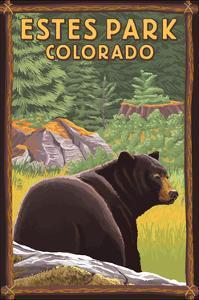 Estes Park, Colorado - Black Bear in Forest by Lantern Press