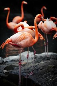 Flamingos by Lantern Press
