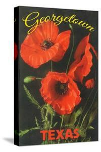 Georgetown, Texas - Corn Poppy Flowers by Lantern Press