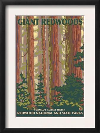 Giant Redwoods, Redwood National Park, California