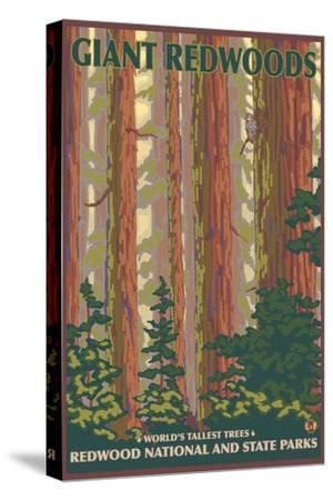 Giant Redwoods, Redwood National Park, California