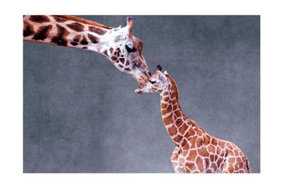 Giraffe and Calf by Lantern Press