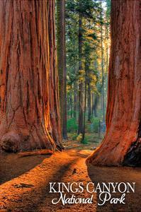 Grants Grove - Kings Canyon National Park, California by Lantern Press