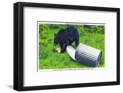 Great Smoky Mts Nat'l Park, TN - Black Bear Stealing Lunch from Trashcan