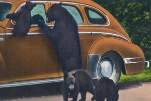 Great Smoky Mts. Nat'l Park, Tn - View of Black Bear and Cubs Looking in a Car, c.1940 by Lantern Press