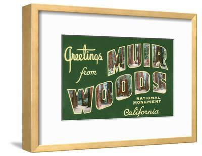 Greetings from Muir Woods National Monument, California