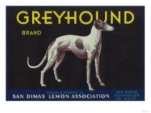 Greyhound Lemon Label - San Dimas, CA by Lantern Press