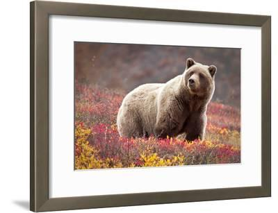 Grizzly Bear and Flowers