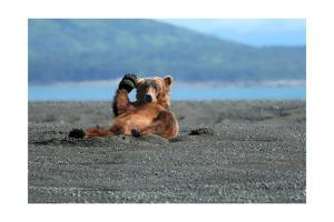 Grizzly Bear Waving by Lantern Press