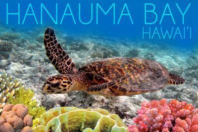 Hanauma Bay, Hawai'i - Sea Turtle and Coral