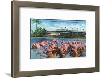 Hialeah, Florida - View of Flamingos outside the Hialeah Race Course