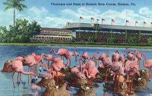 Hialeah, Florida - View of Flamingos outside the Hialeah Race Course by Lantern Press