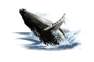 Humpback Whale - Icon by Lantern Press