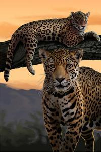 Jaguars by Lantern Press
