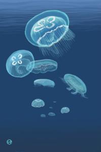 Jellyfish by Lantern Press