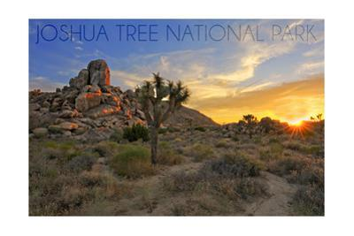 Joshua Tree National Park, California - Sunrise