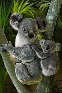 Koala by Lantern Press