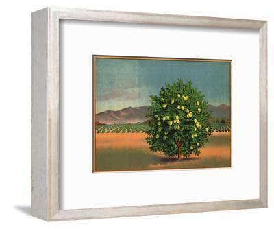 Lemon Tree and Orchard - Citrus Crate Label