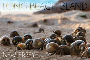 Long Beach Island, New Jersey - Group of Hermit Crabs by Lantern Press