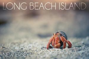 Long Beach Island, New Jersey - Hermit Crab on Beach by Lantern Press