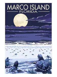 Marco Island, Florida - Baby Sea Turtles by Lantern Press