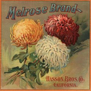 Melrose Brand - California - Citrus Crate Label by Lantern Press