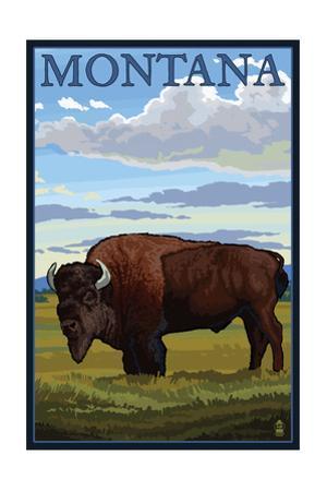 Montana - Bison Scene by Lantern Press