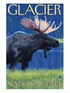 Moose at Night, Glacier National Park, Montana by Lantern Press