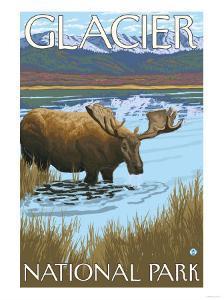 Moose Drinking at Lake, Glacier National Park, Montana by Lantern Press