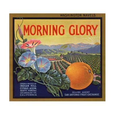 Morning Glory Brand - Pomona, California - Citrus Crate Label by Lantern Press