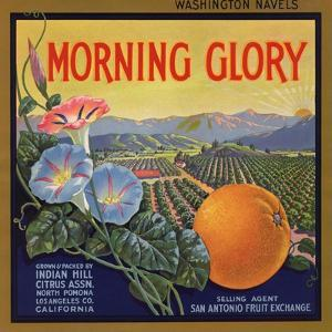 Morning Glory Brand - Pomona, California - Citrus Crate Label by Lantern Press