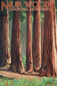 Muir Woods National Monument, California - Deer and Grove by Lantern Press