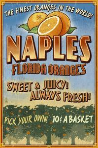 Naples, Florida - Orange Grove Vintage Sign by Lantern Press