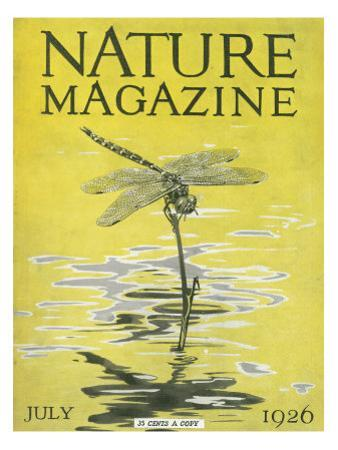 Nature Magazine - View of a Dragonfly over a Pond, c.1926