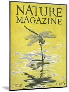 Nature Magazine - View of a Dragonfly over a Pond, c.1926 by Lantern Press