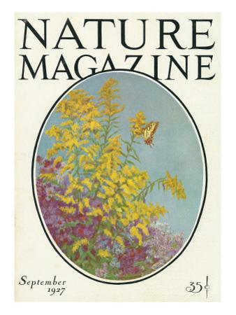 Nature Magazine - View of Blooming Flowers and a Butterfly, c.1927