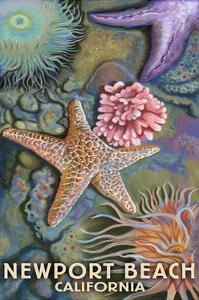 Newport Beach, California - Tidepools by Lantern Press
