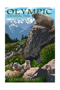 Olympic National Park - Marmots by Lantern Press