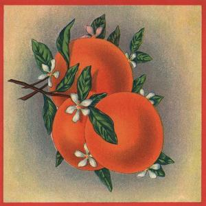 Orange Branch - Citrus Crate Label by Lantern Press