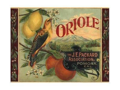Oriole Brand - Pomona, California - Citrus Crate Label by Lantern Press