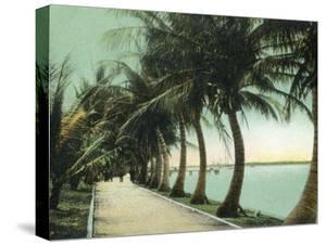 Palm Beach, Florida - Palm Walk Along Lake Worth by Lantern Press
