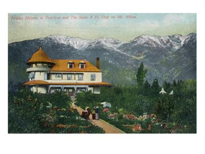 Pasadena, California - Picking Flowers Near Mount Wilson