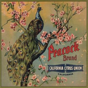 Peacock Brand - California - Citrus Crate Label by Lantern Press