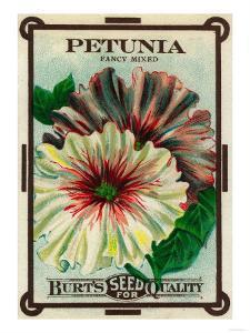 Petunia Seed Packet by Lantern Press