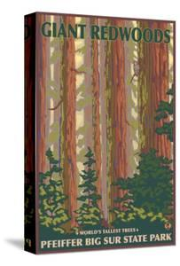 Pfeiffer Big Sur State Park, California - Giant Redwoods by Lantern Press